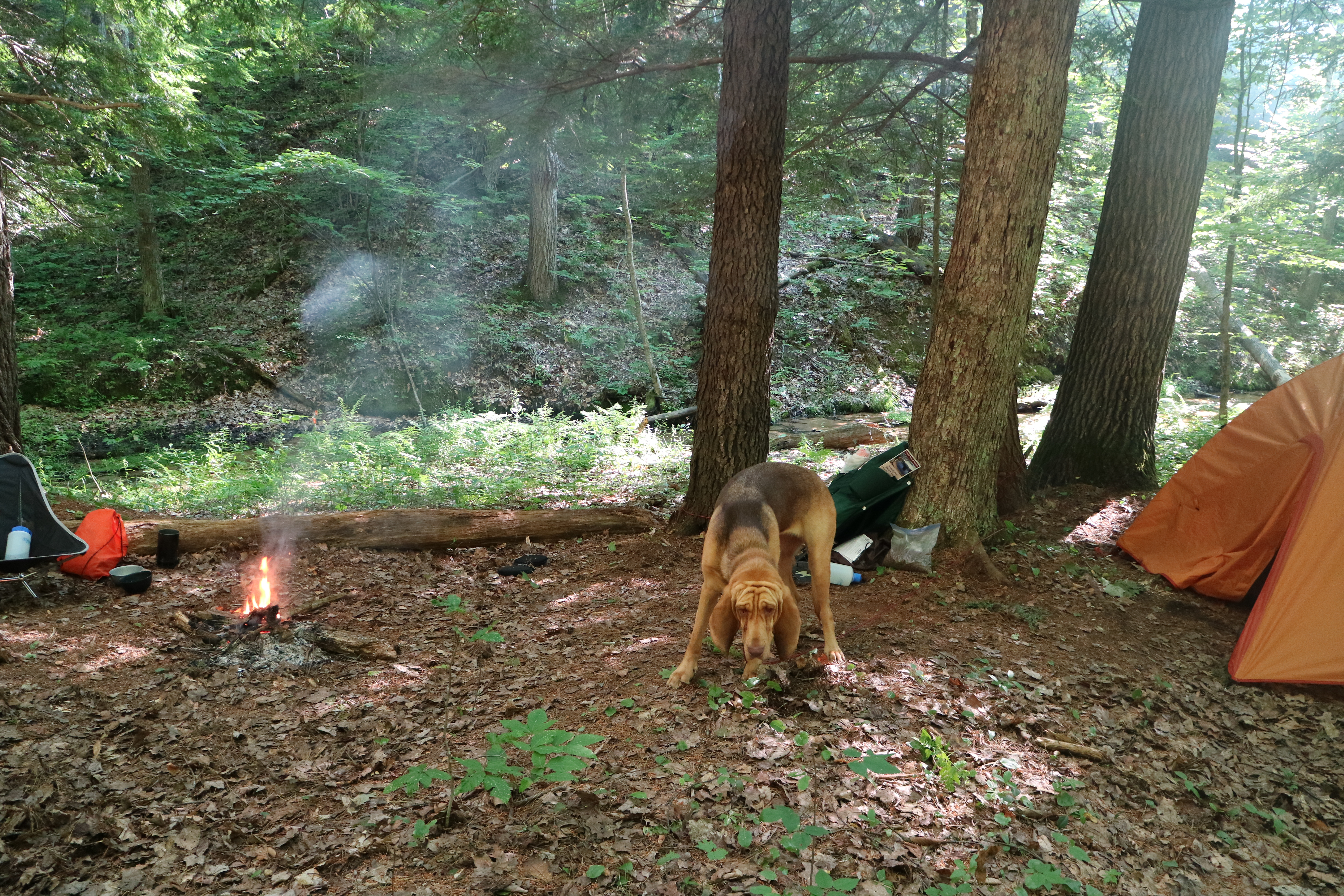 The Manistee River Trail: Tips for the First Time Backpacker - Aum
